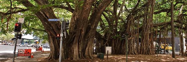 trees-city-brisbane