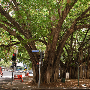 Selecting A Local Tree Removal Specialist In Brisbane.